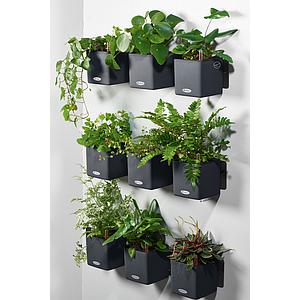 Lechuza Green Wall Home Kit Color schiefergrau